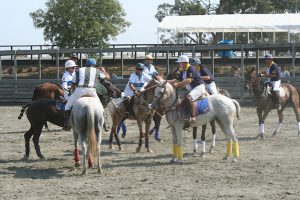 Winter Arena Polo @ Woodside Horse Park